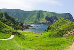Cliff covered with grass Royalty Free Stock Images