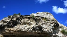 Cliff Edge Harbors Swallows Immagini Stock