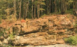 Cliff face with trees on top. Cliff face beside a river with trees on top stock image