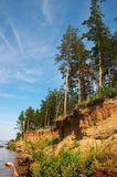 Cliff and firs. Vertical cliff and firs Stock Photo