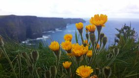 Cliff. Flower moher cliff sea beatiful Royalty Free Stock Photos