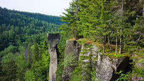 Cliff Forest Stock Photography
