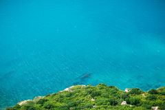 Cliff with frees and blue sea. Summer day on ocean. Summer day on ocean. Cliff with frees and blue sea Stock Photo