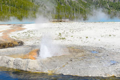 Cliff Geyser Yellowstone National Park Royalty Free Stock Image