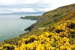 Cliff in Ireland. The cliffs in Howth, Dublin stock photo