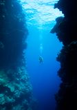 cliff nurka pływać pod wodą Zdjęcie Stock