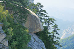 Cliff and pine Royalty Free Stock Photography