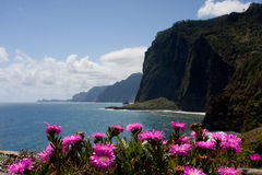 Cliff with pink flowers stock images