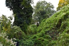 Cliff With Plants And Trees Photo stock