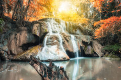 Cliff rock in waterfall gold rainforest Stock Image