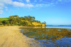 Sunrise Time at Scandrett Beach Auckland New Zealand. Cliff Rocky Headlands. Calm and Peaceful During Low Tide Royalty Free Stock Image