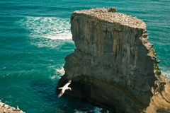Cliff in the sea with gulls Stock Photography