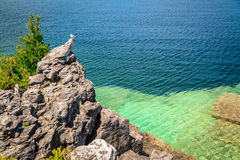 Cliff with seagull on top, above beautiful tranquil azure water of Cyprus lake at Bruce Peninsula, Ontario Stock Photos