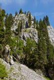 cliff stroma Obraz Stock