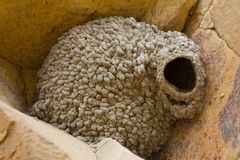 Cliff swallow nest Stock Images