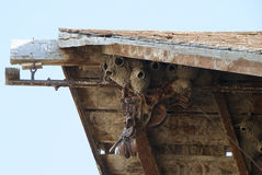 Cliff Swallow Nest Stock Photography