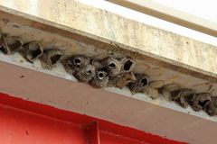Cliff Swallow Nests Made Of Mud Under A Bridge Overhang Stock Photos