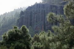 Cliff in tenerife forest stock photo