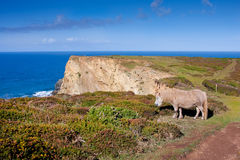 Cliff Top Landscape with Wild Grazing Pony Stock Photography