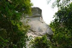 Cliff tree Stock Image
