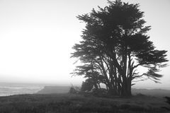 Cliff Top Tree Royalty Free Stock Images