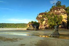 Cliff with tree on tropical beach at low tide Stock Images