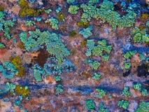 Cliff Visions: Turkooise Korstmossen op Zandsteen stock afbeeldingen