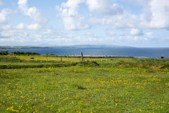 Cliff walk and field of buttercups Royalty Free Stock Photo