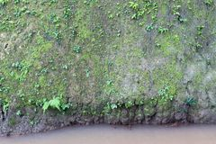 Cliff Wall With Moss Fern. Stock Photo