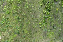 Free Cliff Wall With Moss Fern. Royalty Free Stock Photo - 100169915