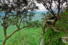 Cliff and the wilderness below,the tropical of Thailand Stock Photography