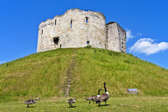 Clifford's Tower at York Royalty Free Stock Photography
