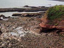 Cliffs in Arbroaht. Coastal cliffs in Arbroath, Scotland, on the North Sea Stock Photos