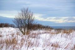 Cliffs. Coastal cliffs near Paldiski city in Estonia Stock Photography