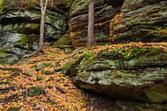 Cliffs of Color. Trees cling to rocky cliffs and cover them in autumn color at The Ledges in the Virginia Kendall section of Cuyahoga Valley National Park, Ohio Stock Photos
