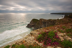 Cliffs in Cornwall, UK. Blooming heather atop cliffs in Cornwall, UK Royalty Free Stock Photography