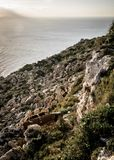 Cliffs at the cost of Malta. Next to the mediterrean sea Stock Images