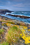 Cliffs in Crookhaven County Cork Royalty Free Stock Images