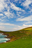 Cliffs on  Dingle Peninsula, Ireland. Scenic landscape by sea on Dingle Peninsula in Ireland Royalty Free Stock Photography