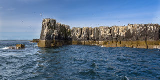 Cliffs of Farne islands Stock Photo