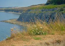 Cliffs with grass and flowers of the French Opal north sea coast near Boulogne sur mer. Cliffs with grass and wildflowers of the French Opal north sea coast near stock images