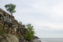Cliffs and lone tree at costline Stock Photography