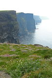 The Cliffs of Moher. (Ireland) surrounded by fog royalty free stock photo