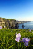 Cliffs Of Moher. The Cliffs Of Moher Co. Clare Irealand Royalty Free Stock Photo
