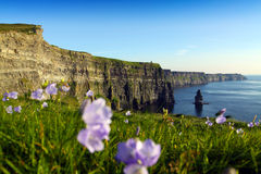 Cliffs Of Moher. The Cliffs Of Moher Co. Clare Irealand Stock Image