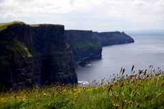 Cliffs of Moher. A view of the cliffs of Moher in Ireland with wild grass in the foreground Royalty Free Stock Photos