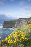 Cliffs of Moher, Clare Coast Royalty Free Stock Photography