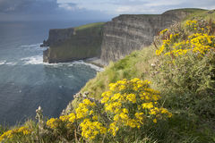 Cliffs of Moher, Clare Coast Stock Photo