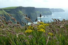Cliffs of Moher Ireland. Famous cliffs in green Ireland Royalty Free Stock Photo