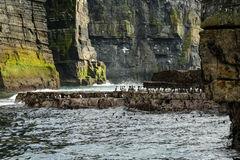 Cliffs of Moher, Ireland. Birds at the Cliffs of Moher, Doolin, Ireland Stock Images